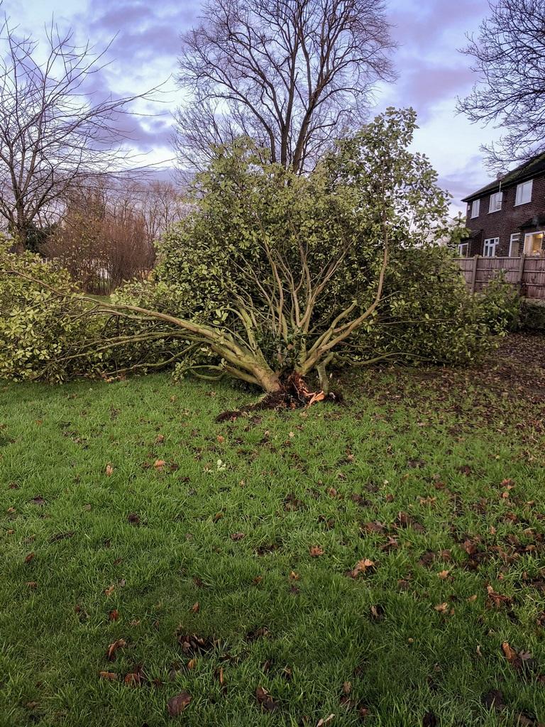 fallen trees in December 2019